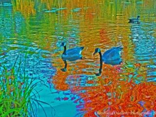 Mud Lake Art